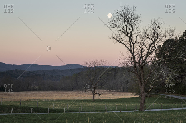 Moonset above a tree and mountains in Cades Cove within the Great Smoky Mountains National Park in Tennessee