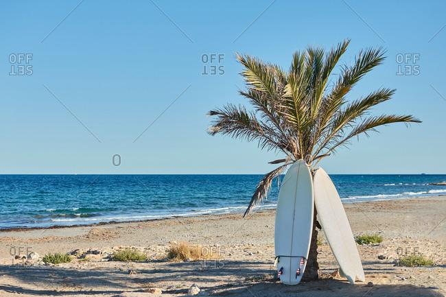 Modern surfboards placed near tropical palm tree on sandy beach near blue sea on sunny day in summer