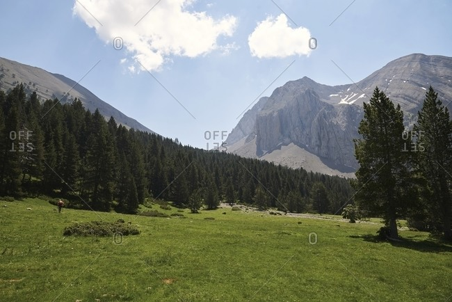 Wonderful view of mountain range in front of green valley with coniferous trees on sunny day in summer