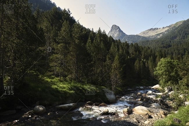 Picturesque scenery of fast mountain river with boulders flowing in evergreen woods on sunny day in summer