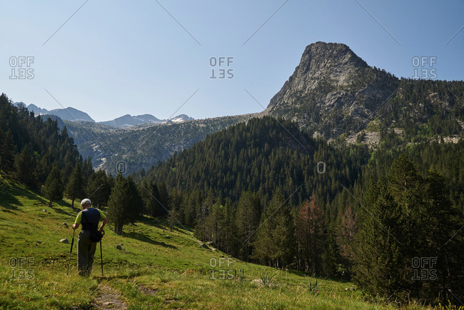 Back view of unrecognizable male explorer with trekking poles hiking in green highland valley under blue sky on sunny day