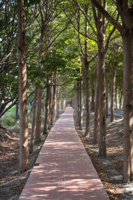 Long asphalt walkway surrounded by green trees in Tanya Shen Green Bikeway in Taichung