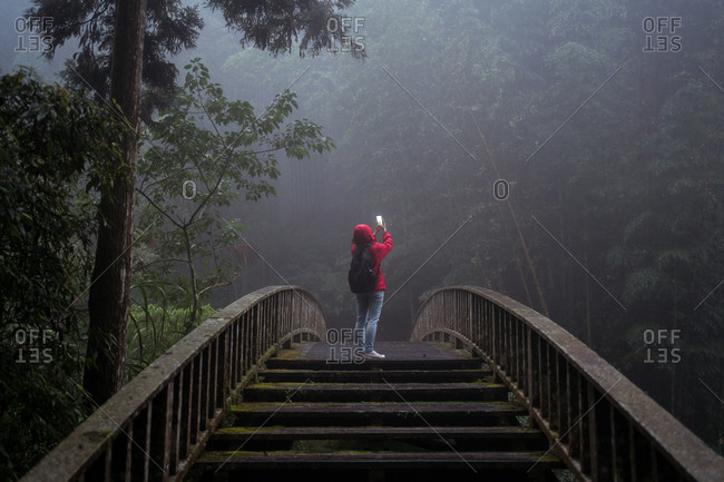 Low angle back view of anonymous hiker in hoody raincoat standing on footbridge and taking picture of nature while hiking alone in green coniferous forest in foggy rainy weather