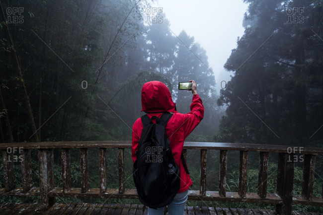 Back view of anonymous hiker in hoody raincoat standing on footbridge and taking picture of nature while hiking alone in green coniferous forest in foggy rainy weather