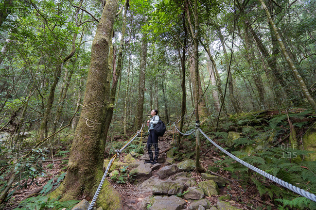 From below of female explorer standing on rocky trail in woods and enjoying nature during vacation in Taiwan