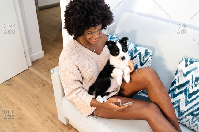 From above young black female in casual clothes sitting on sofa with smartphone on hand with cute little puppy on lap at home