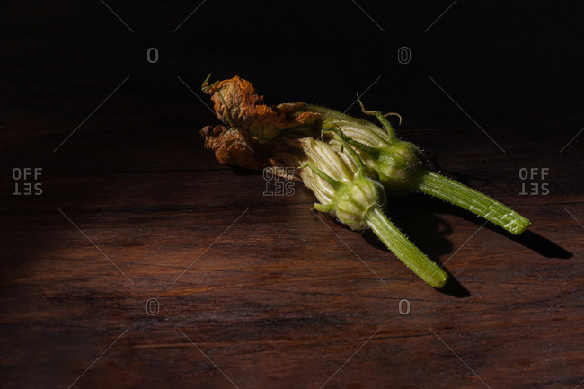 Baroque painting style still life with fresh edible zucchini flowers composed on dark wooden surface with pictorial light