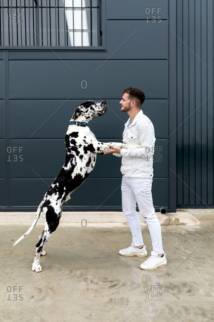 Side view of cheerful male owner embracing with Harlequin Great Dane while standing on street in city