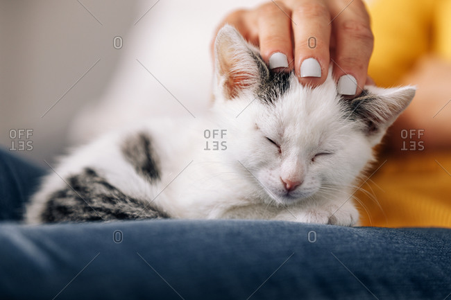 Crop anonymous female owner embracing and stroking cute kitty while resting at home