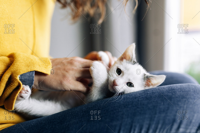 Side view of crop anonymous female owner embracing and stroking cute kitty while resting at home