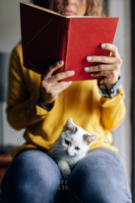 Crop female in casual outfit with cute little kitten on knees reading interesting book while enjoying free time at home