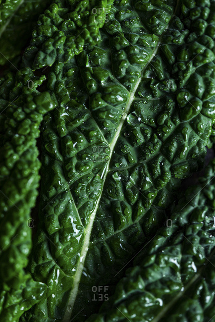 Macro shot of kale leaf with water droplets