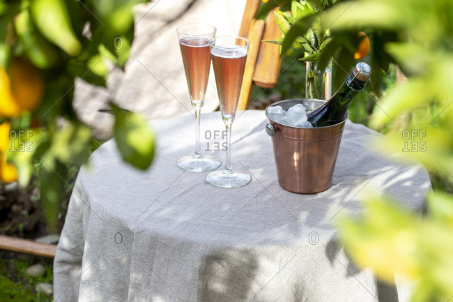 Table in the garden near the orange tree with two glasses of sparkling rose wine.