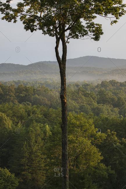 USA, Georgia, Blue Ridge Mountains, Fog in Blue Ridge Mountains