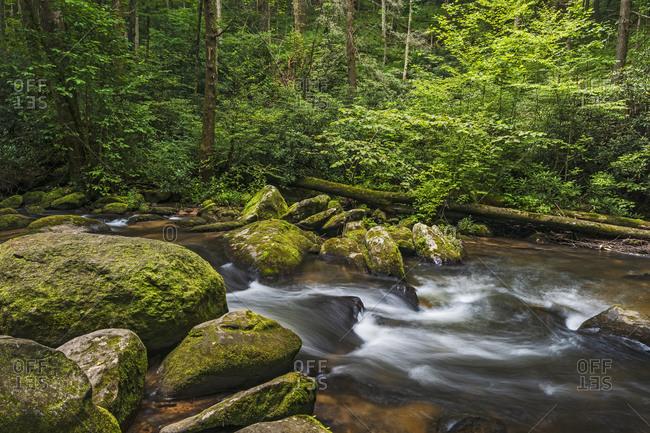 USA, Georgia, Blue Ridge Mountains, Chester Creek in Blue Ridge Mountains