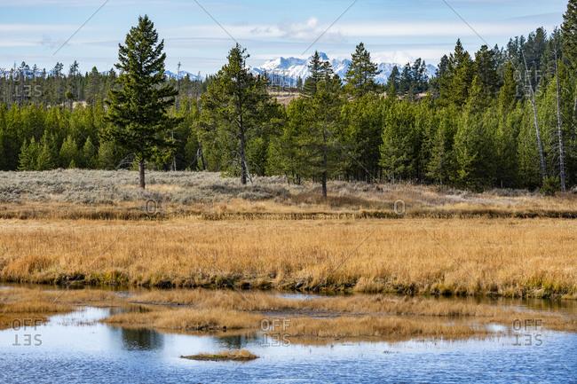 USA, Wyoming, Yellowstone National Park, Winter frost in fall landscape in Yellowstone National Park