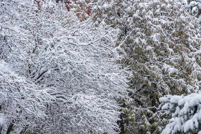 Trees in forest covered with winter snow