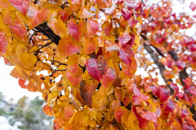 Close up of colorful autumn leaves on branch