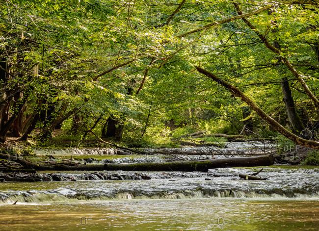 Cascades on the Tanew River, Szumy nad Tanwia, Tanew Nature Reserve, Roztocze, Lublin Voivodeship, Poland, Europe