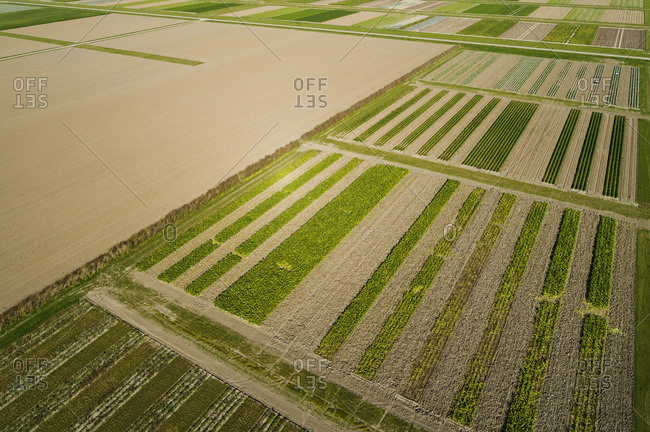 Experimental field for strip cultivation, Flevoland, Netherlands