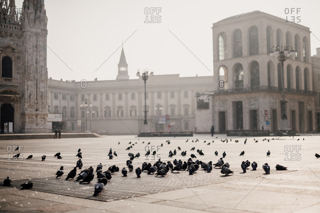 Pigeons in quiet Piazza del Duomo during 2020 Covid-19 Lockdown, Milan, Italy