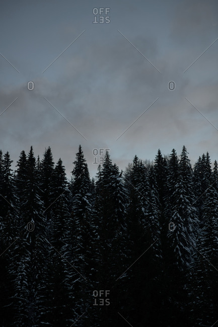 Forest in the Bjelasnica mountains in Bosnia and Herzegovina at dusk