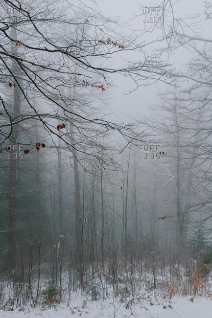 Dense fog in a forest in rural Bosnia and Herzegovina