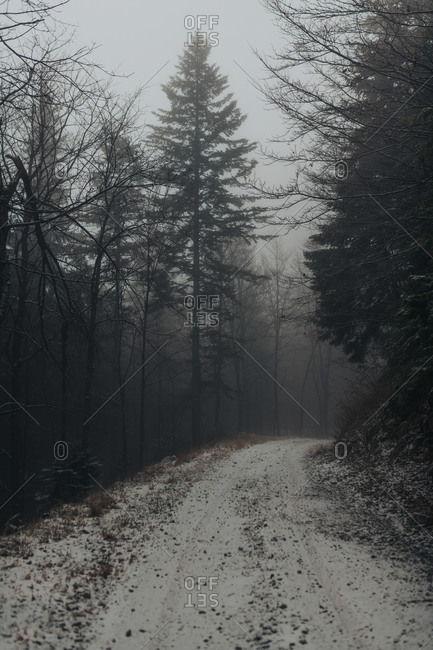 Dense fog surrounding dirt road in a forest in rural Bosnia and Herzegovina