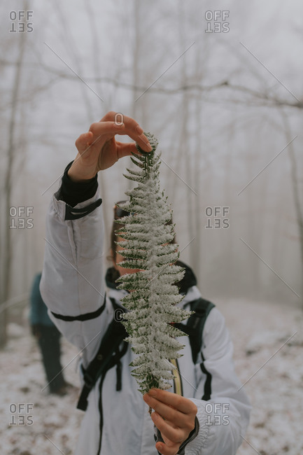 A woman holding a snow covered fern plant in the forest in rural Bosnia and Herzegovina