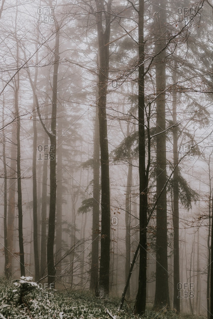 Dense fog in a forest in the Bjelasnica mountains in Bosnia and Herzegovina
