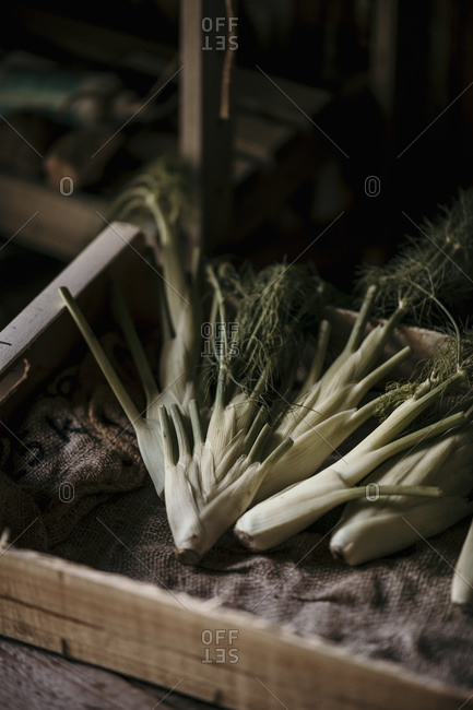 Fresh cultivated vegetable on table