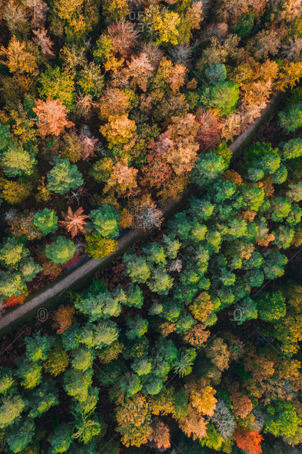 Aerial view of forest, autumn view of trees with track, New Forest, Lyndhurst, United Kingdom