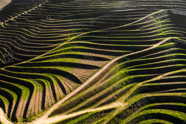 Aerial view of the patterns of vineyards terraces used for production of Port Wine, in Folgosa, Armamar, Douro Valley, Portugal