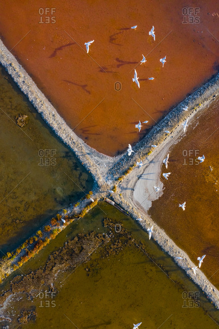 Aerial view of the patterns and colors of salt evaporation ponds with birds in Aveiro, Portugal