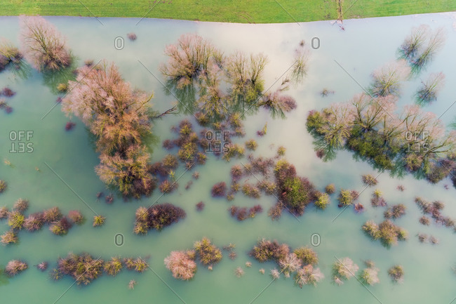 Aerial view of trees on submerged floodplains along the dike, Ooijpolder, Gelderland, Netherlands