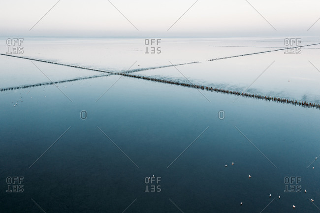 Aerial view of bird flock at the Wadden Sea, Friesland, The Netherlands.