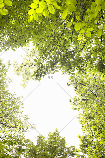 Low angle view of a bright sky surrounded by green tree branches