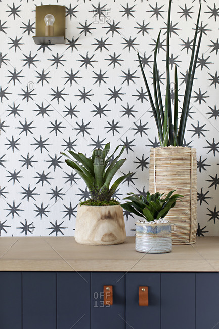 Three potted plants on top of blue cabinet in front of star patterned wall