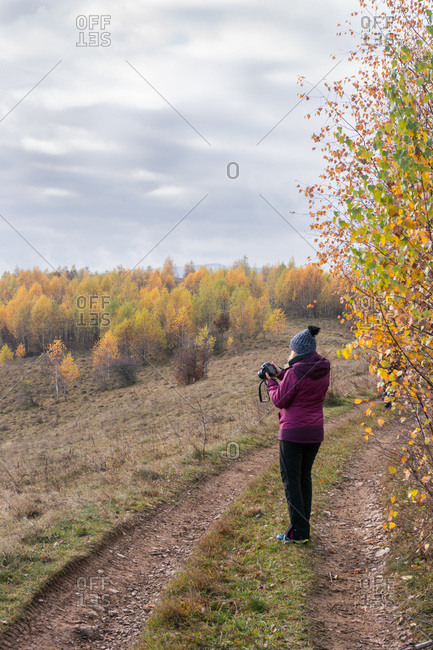 Woman photographing trees with yellow leaves, autumn on the hill