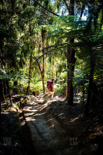 Woman walking through forest on the Abel Tasman Coast Track
