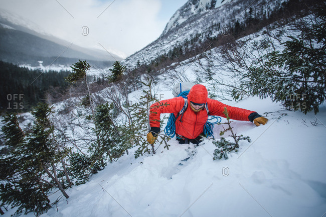 A male alpine climber fights through thick trees and bushes in snow