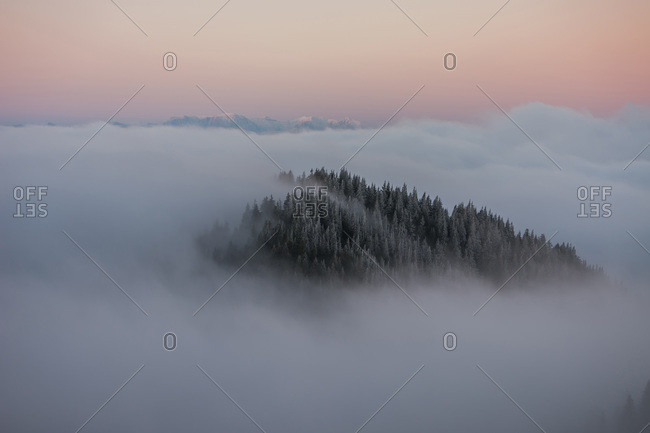 Pine Tree Forest covered in Fog at Sunrise Mountains in the background