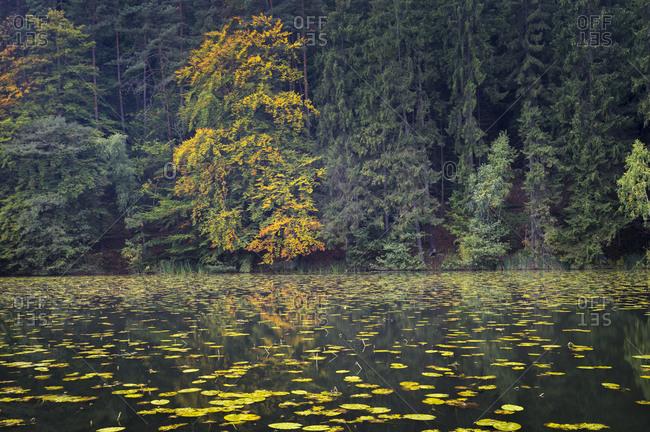 Idyllic shot of pond with lily flowers during autumn, Kokorinsko, Czech Republic