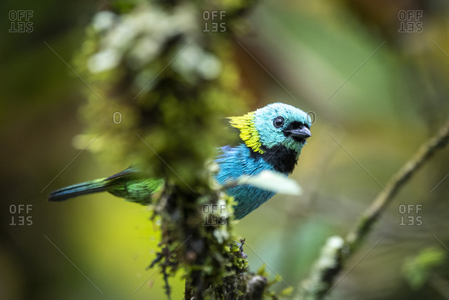 Beautiful colorful tropical bird on tree branch in green rainforest