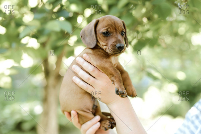 Midsection of woman with puppy's standing outdoors