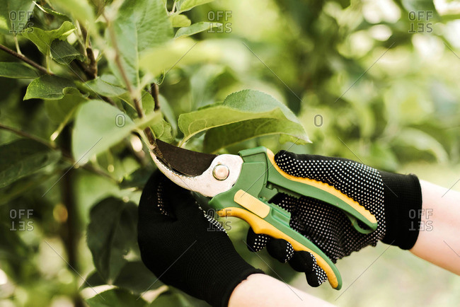 Woman with scissors pruning tree in a garden.
