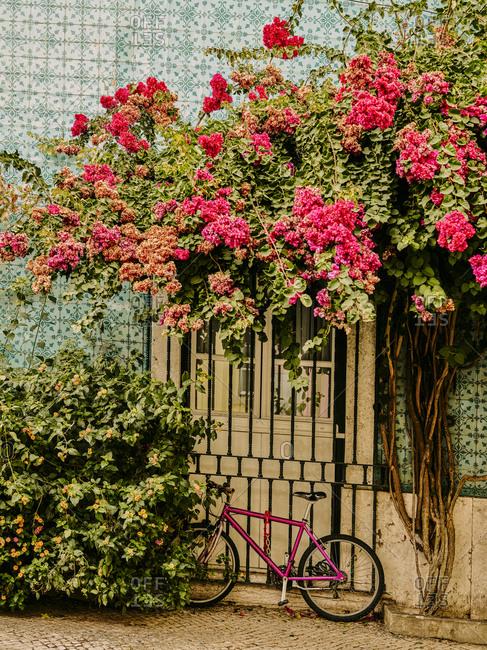 Bougainvillea flowers above pink bike