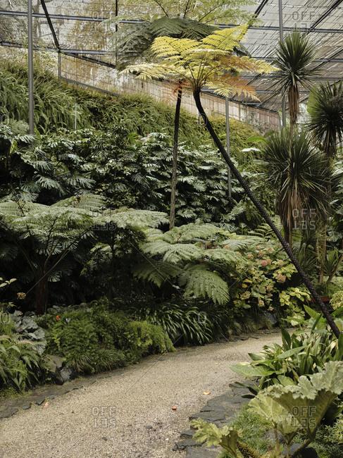 Pathway in Estufa Fria Botanic Gardens