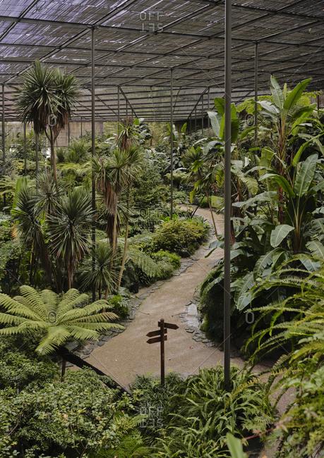 Overhead shot of Estufa Fria Botanic Gardens