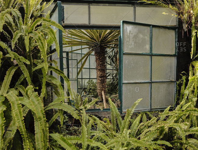 Palm tree through window at Estufa Fria Botanic Gardens